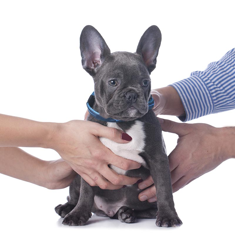 Pet Custody Disputes in Divorce Proceedings